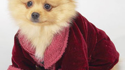 14-precious-pet-fashions-mdn_profile