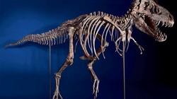 Tyrannosaurus_2718100b_profile
