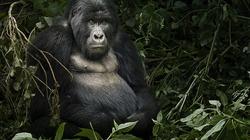 Gorillaweb_profile