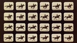 2010_0412_horses_profile