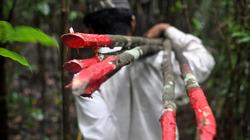 Cambodia-forests_profile